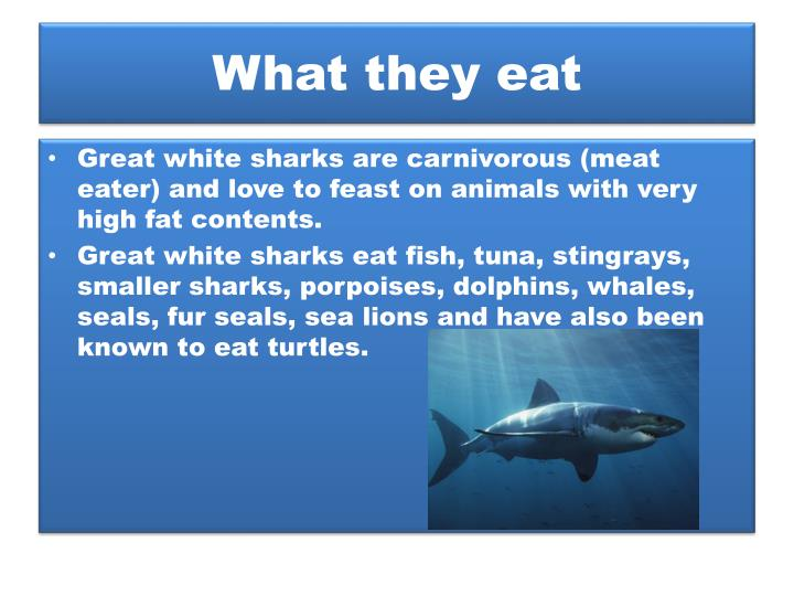 What they eat