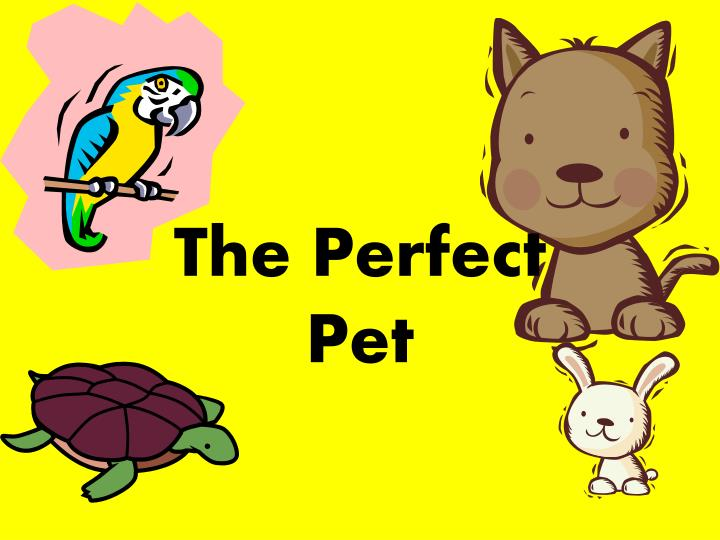 the perfect pet n.