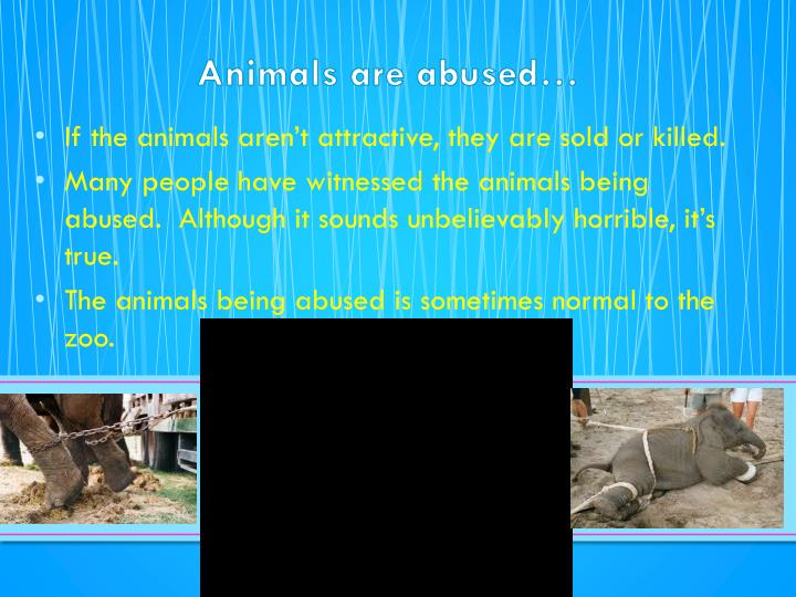 Animals are abused…