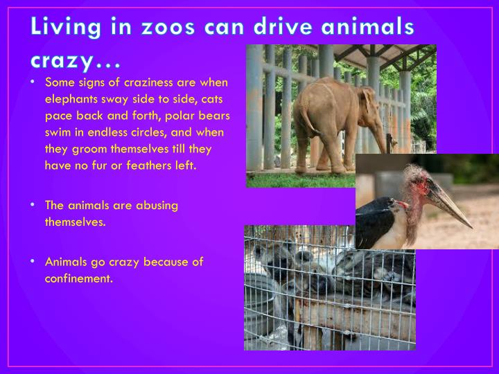 Living in zoos can drive animals crazy