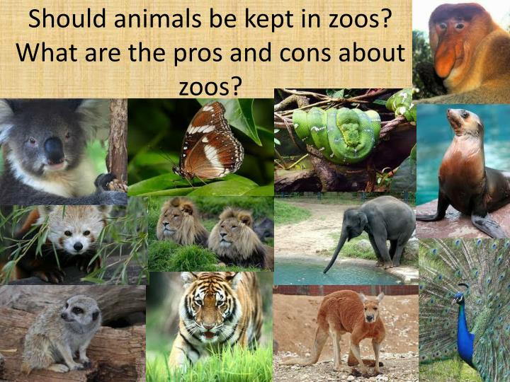 animals should not be kept in zoos No, they should not zoos, aquaprisons and wildlife parks do not provide animals with their natural settings they can't because an enclosure can't be 100 miles long (the distance that some animals travel in a day.