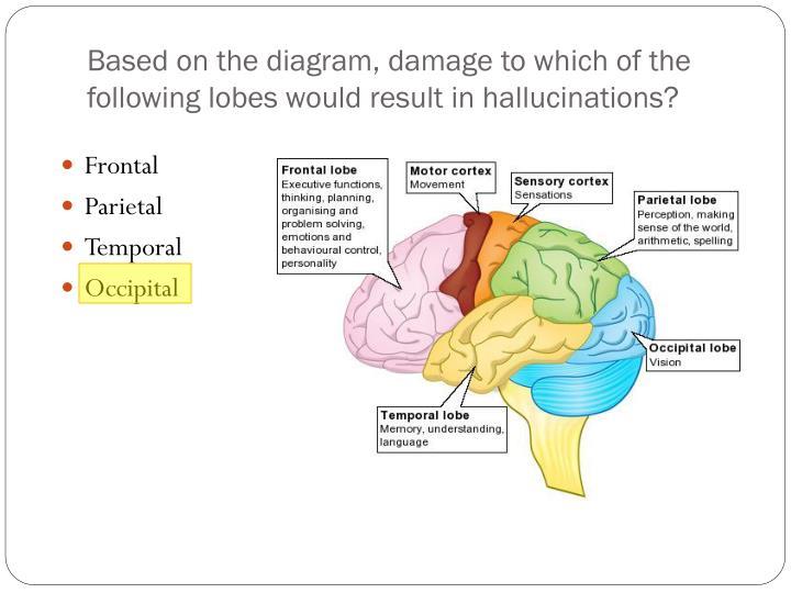PPT - The Brain PowerPoint Presentation - ID:2624354
