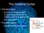 the cerebral cortex1