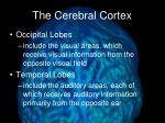 the cerebral cortex2