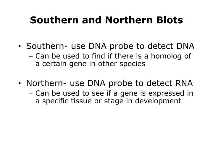 Southern and Northern Blots