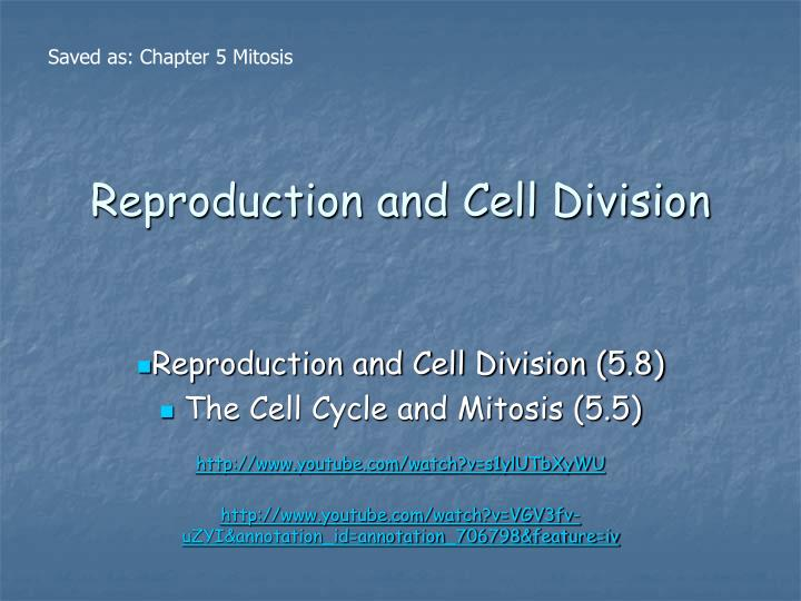 reproduction and cell division n.