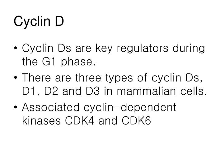 Cyclin D