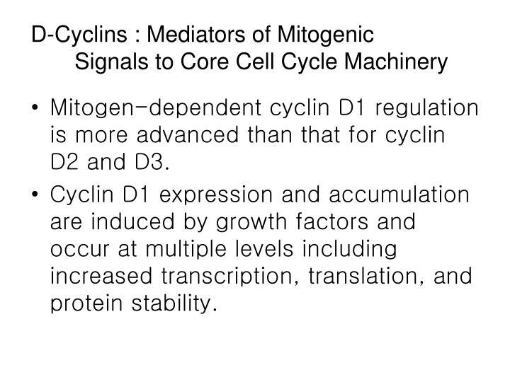D-Cyclins : Mediators of Mitogenic