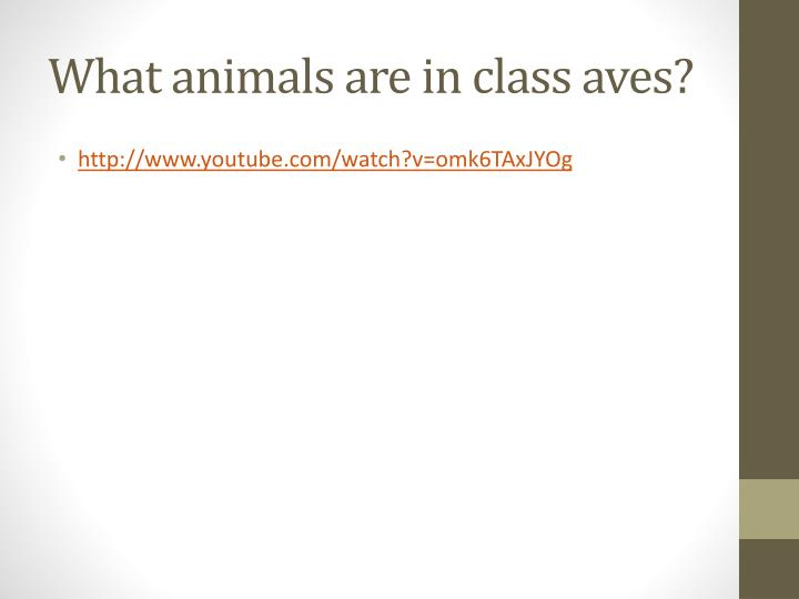 What animals are in class aves