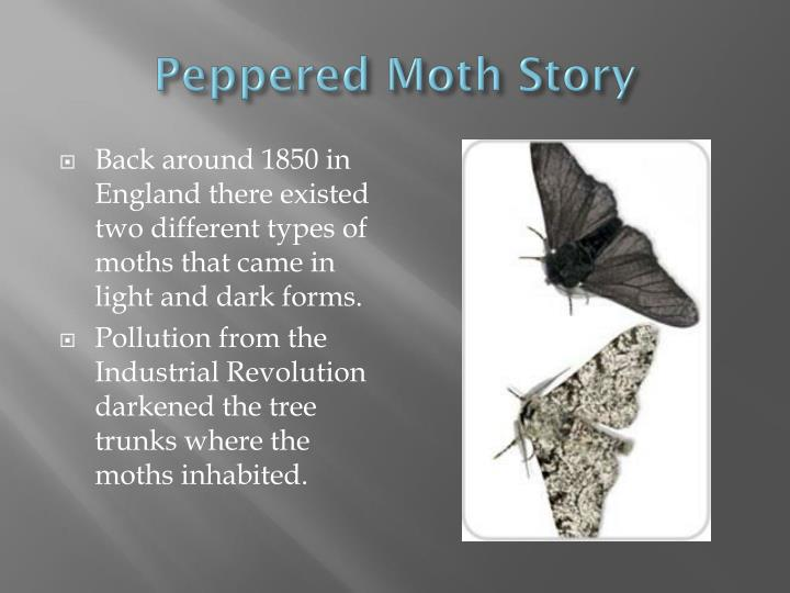 the moth story connected to rizal s life On the story of the moth, rizal thought that the creature's death was justified because he believed that to sacrifice one's life for one's ideals is worthwhile artistic talents since early childhood rizal revealed his god-given talents for the arts.