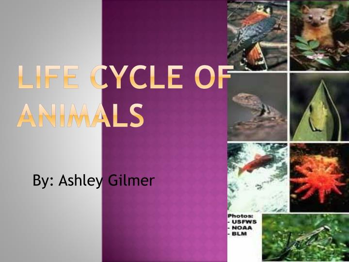 life cycle of animals n.