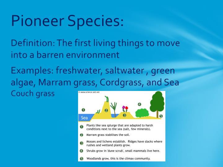 Pioneer Species:
