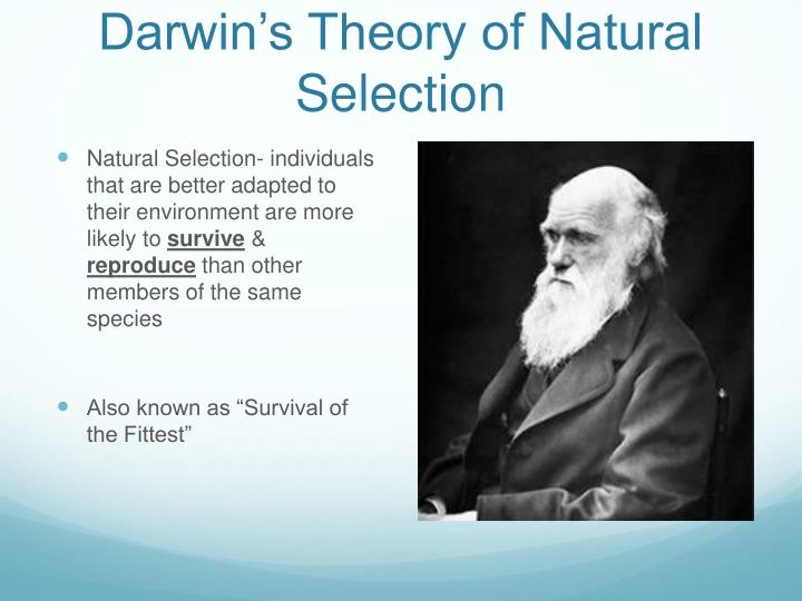 the ideas of darwins theory of natural selection survival of the fittest and improvement of best tra Living biographies of great scientists.