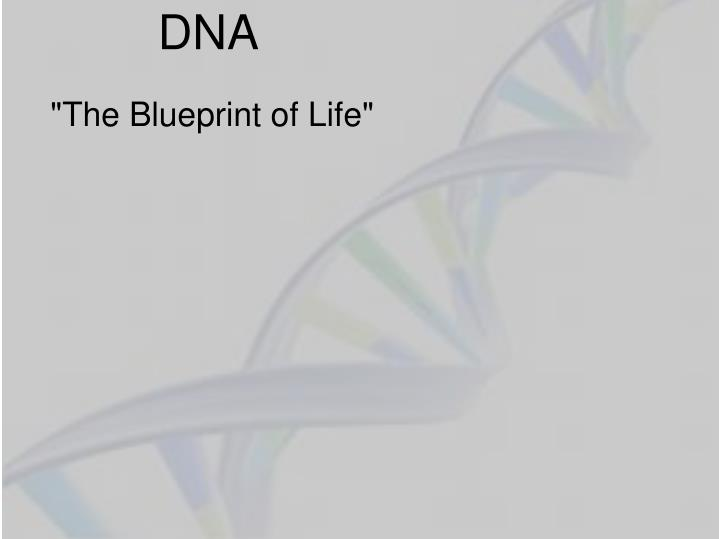 Ppt dna powerpoint presentation id2633323 dna the blueprint of life malvernweather Choice Image