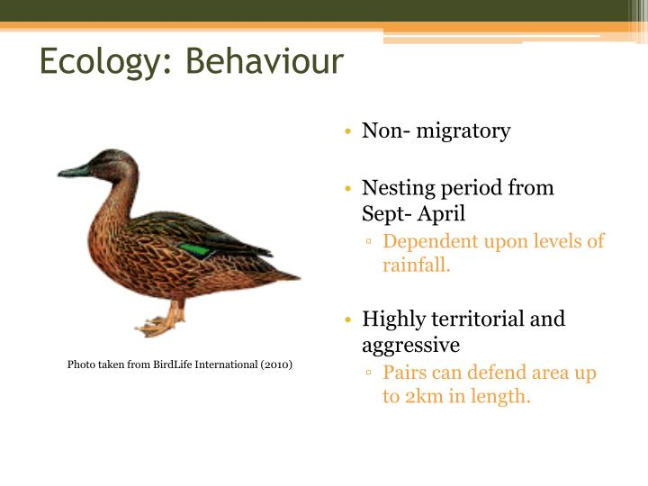 Ecology: Behaviour