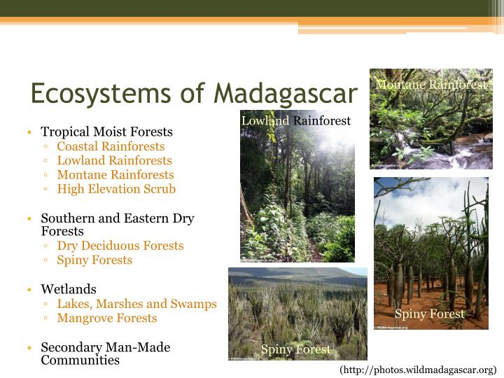 Ecosystems of madagascar