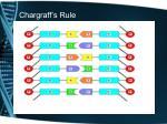 chargraff s rule