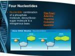 four nucleotides