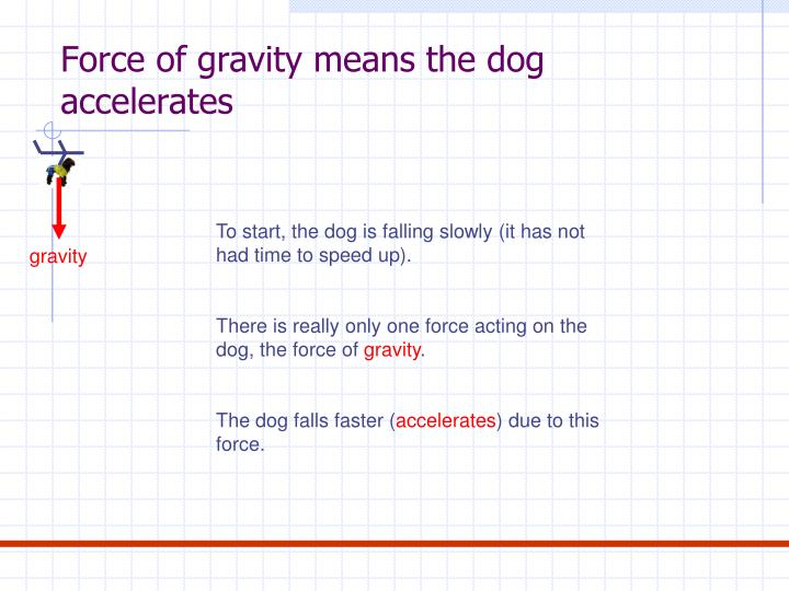 Force of gravity means the dog accelerates