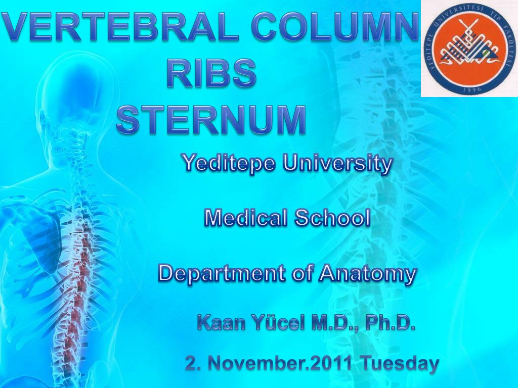 Ppt Vertebral Column Ribs Sternum Powerpoint Presentation Id2636673