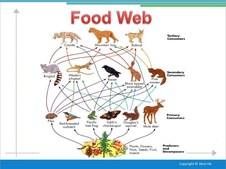 food web diagram of the temperate forest Powered by create your own unique website with customizable templates get started.