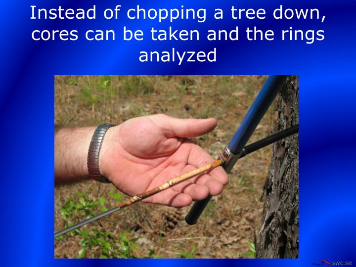 Instead of chopping a tree down, cores can be taken and the rings analyzed