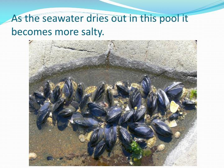 As the seawater dries out in this pool it becomes more salty.