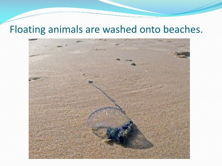 Floating animals are washed onto beaches.