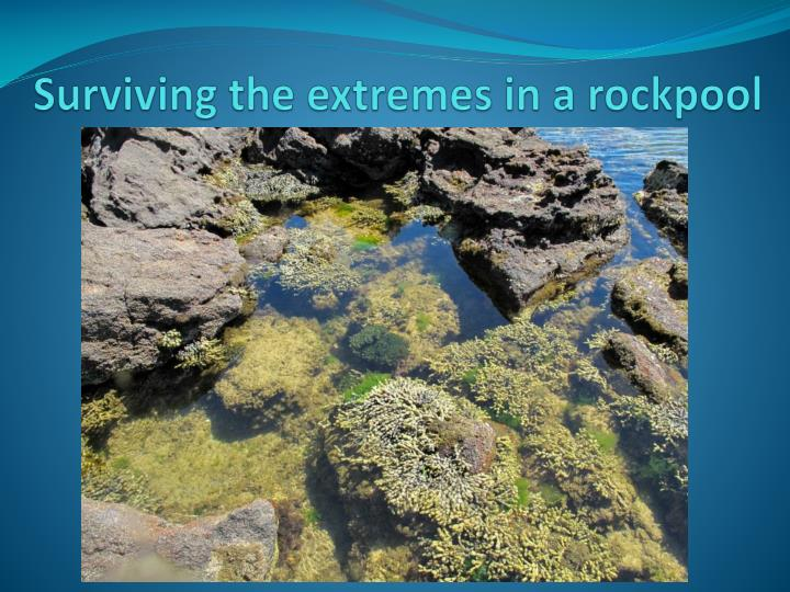Surviving the extremes in a rockpool