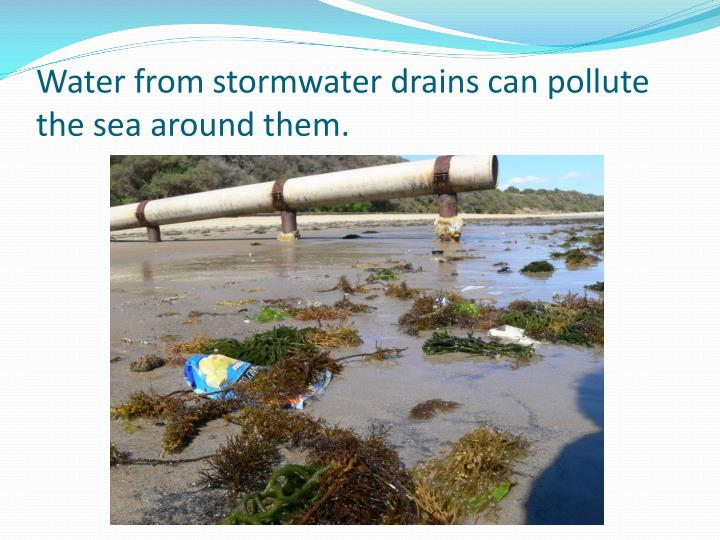 Water from stormwater drains can pollute the sea around them.