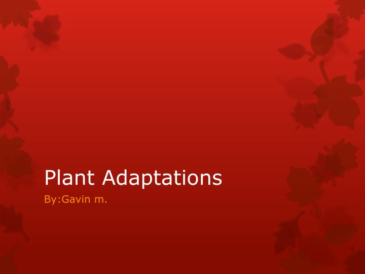 plant adaptations n.