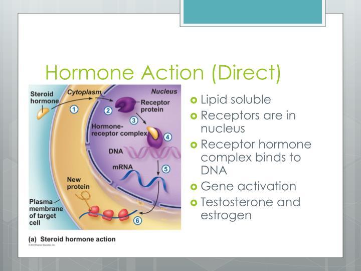 Hormone Action (Direct)