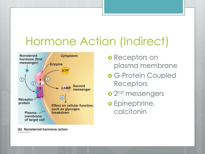 Hormone Action (Indirect)