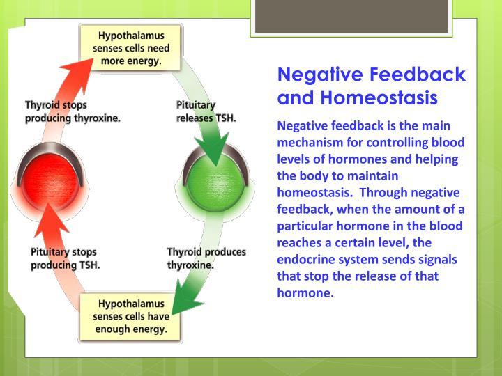 Negative Feedback and