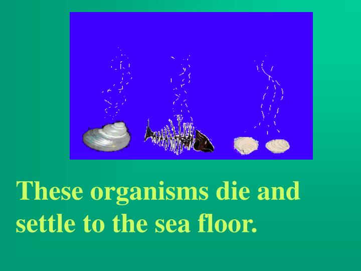 These organisms die and settle to the sea floor.