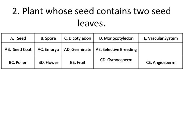 2 plant whose seed contains two seed leaves