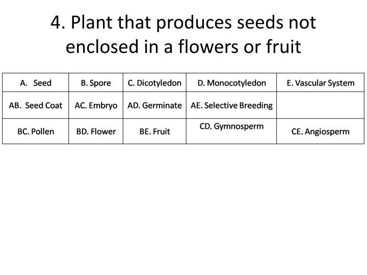 4. Plant that produces seeds not enclosed in a flowers or fruit
