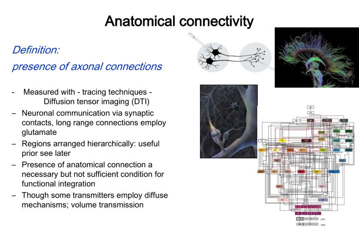 Anatomical connectivity