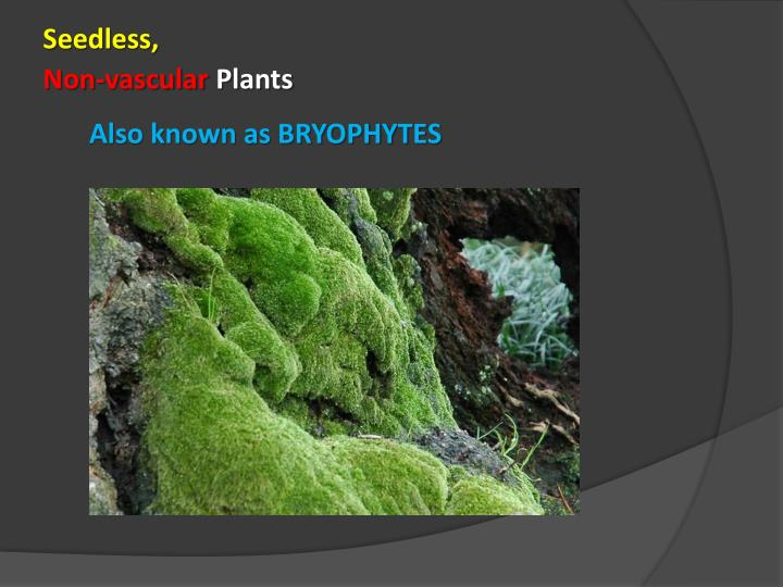 Also known as bryophytes