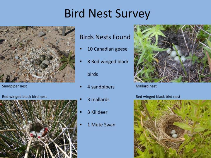 Bird Nest Survey