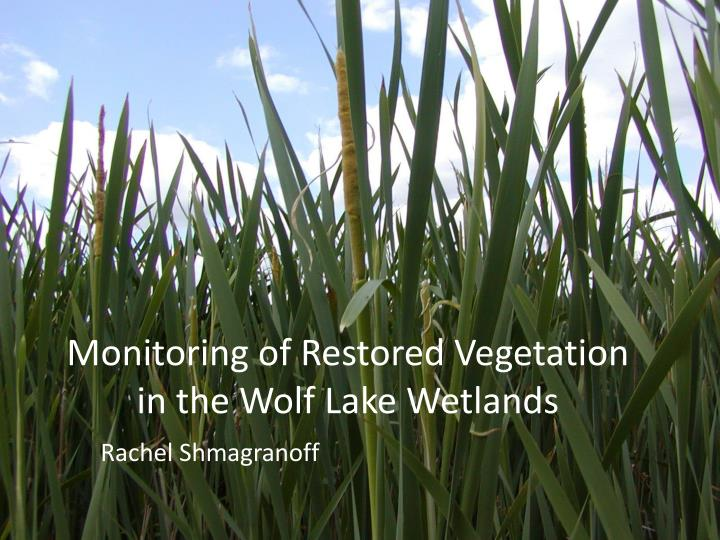 Monitoring of restored vegetation in the wolf lake wetlands