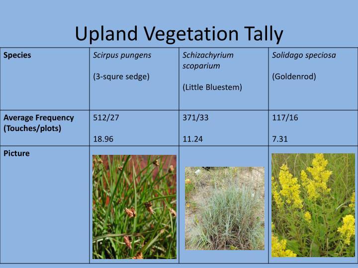 Upland Vegetation Tally