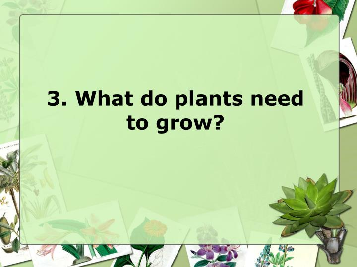 3. What do plants need