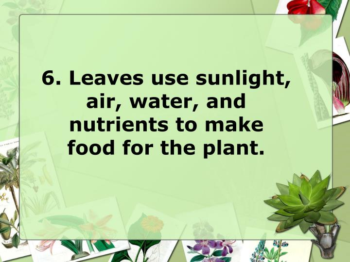 6. Leaves use sunlight, air, water, and
