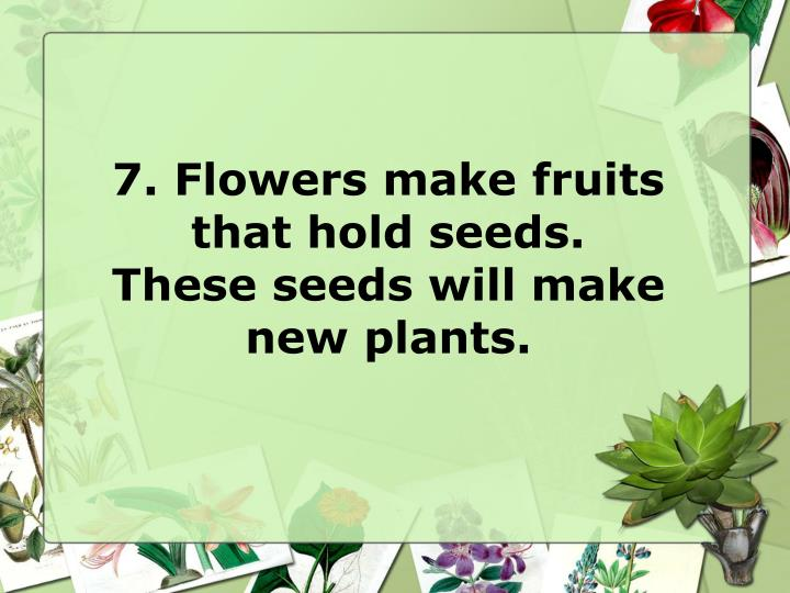 7. Flowers make fruits that hold seeds.