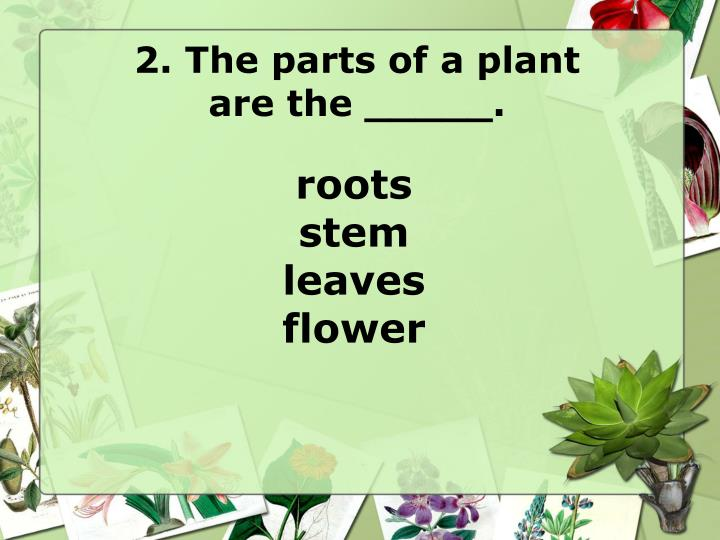 2. The parts of a plant
