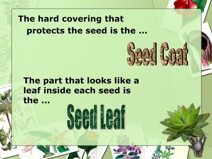 Seed Coat