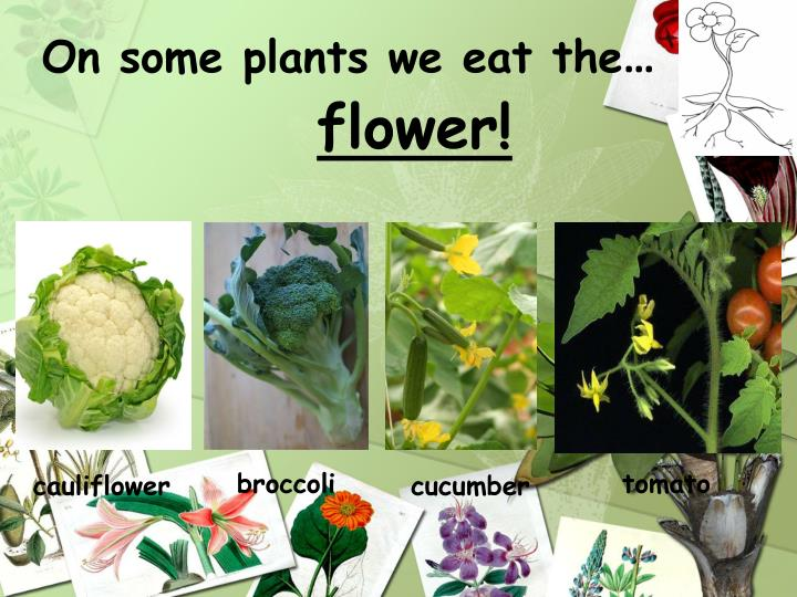 On some plants we eat the