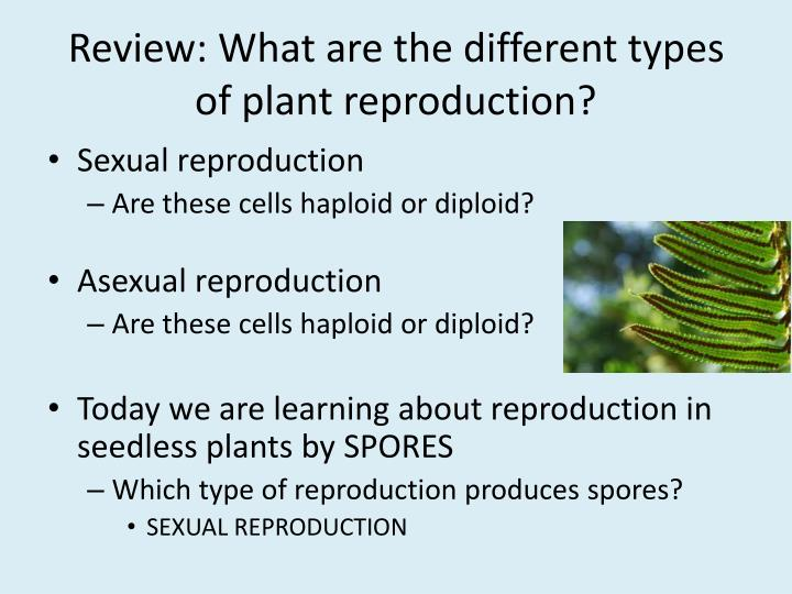 Review what are the different types of plant reproduction