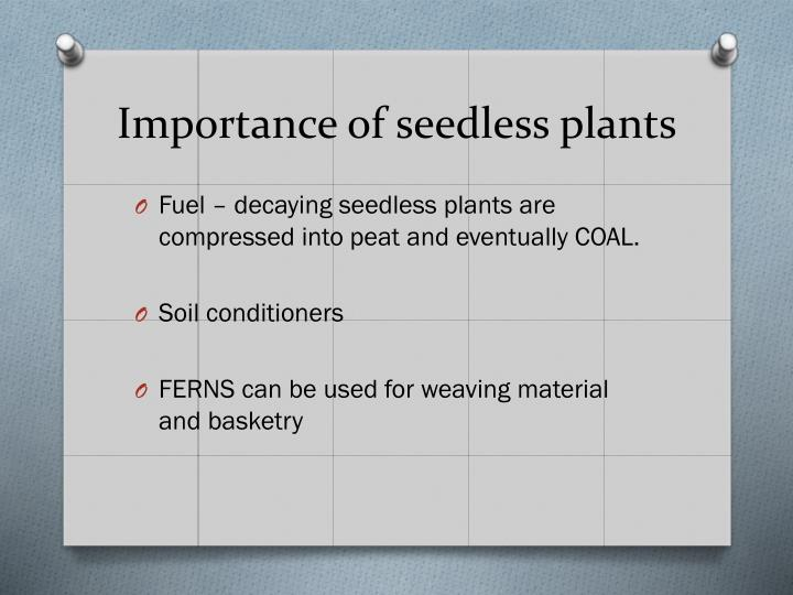 Importance of seedless plants